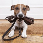Πριν μαλώσεις τον σκύλο σου για κάτι σκέψου Αν…!