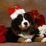 5 λόγοι για να μην πάρω δώρο έναν σκύλο για τα Χριστούγεννα