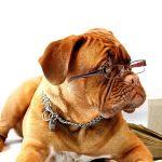 Τι προσωπικότητα έχει ο σκύλος σου ?