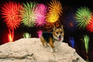 dogs_fireworks