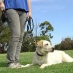 Πως να επιλέξετε εκπαιδευτή σκύλων