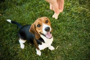 rewarding your dog