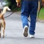 Σκύλος, λουρί και τράβηγμα στη βόλτα