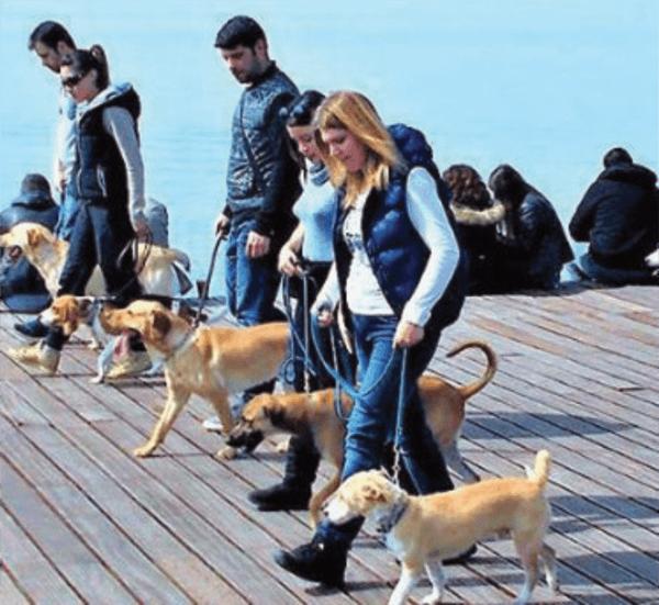 εκπαιδευση σκυλων θεσσαλονικη