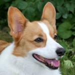 Πως θα καταλάβετε ότι ο σκύλος σας χρειάζεται εκπαίδευση?