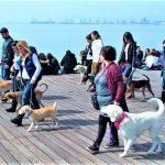 5 ερωτήσεις που θα σε βοηθήσουν να επιλέξεις εκπαιδευτή σκύλων!