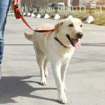 Θέλεις ο σκύλος σου να αρχίσει να σ'ακούει??? … μάθε πως!