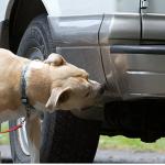 Μετατρέψτε τον σκύλο σας σε σκύλο ανιχνευτή