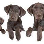 Ηλικία και εκπαίδευση σκύλων…