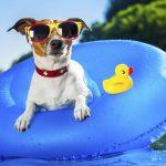 Προετοιμάζοντας τον σκύλο για τις καλοκαιρινές διακοπές!