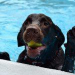 Πώς να προστατεύσετε τον σκύλο σας από την Θερμοπληξία