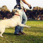 5 τρόποι για έναν πιο ευτυχισμένο σκύλο!