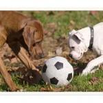 10 συμβουλές για το πως θα ζείτε καλύτερα με τον σκύλο σας