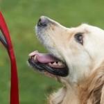 Σχολή εκπαιδευτών σκύλων – Επαγγελματίας εκπαιδευτής