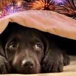 Πως να προστατεύσετε τον σκύλο σας από τα βεγγαλικά, το βράδυ της ανάστασης!