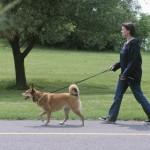 Οι βασικές αρχές της εκπαίδευσης σκύλων